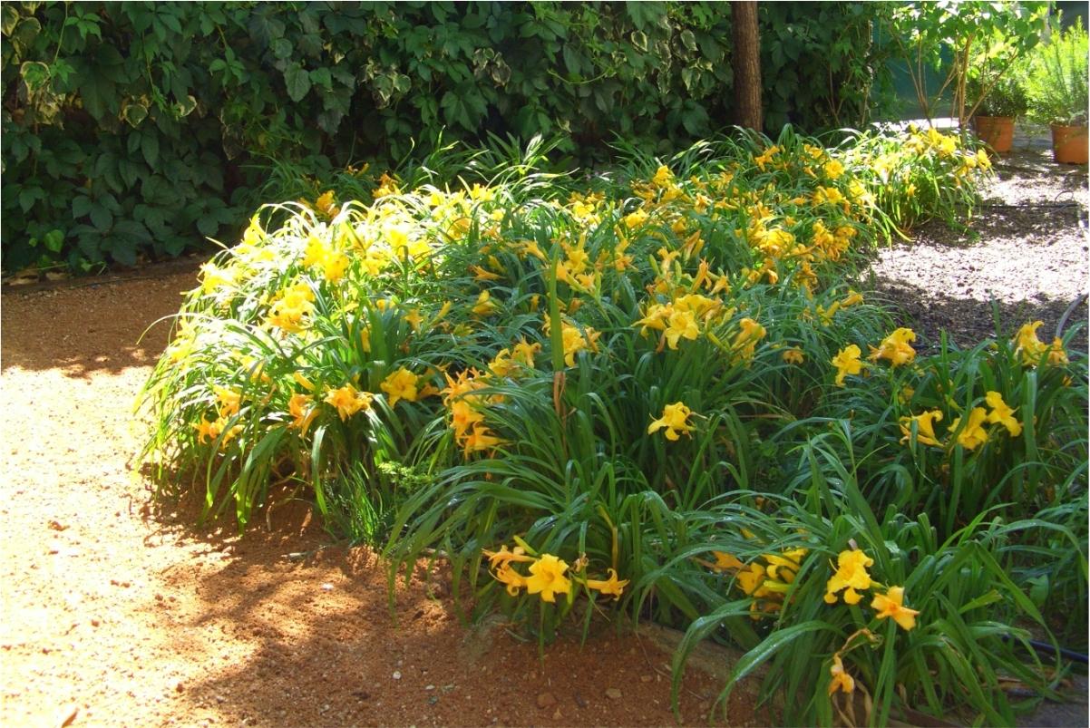 un jardín con encanto .Las Matas   diseño de jardin en las rozas